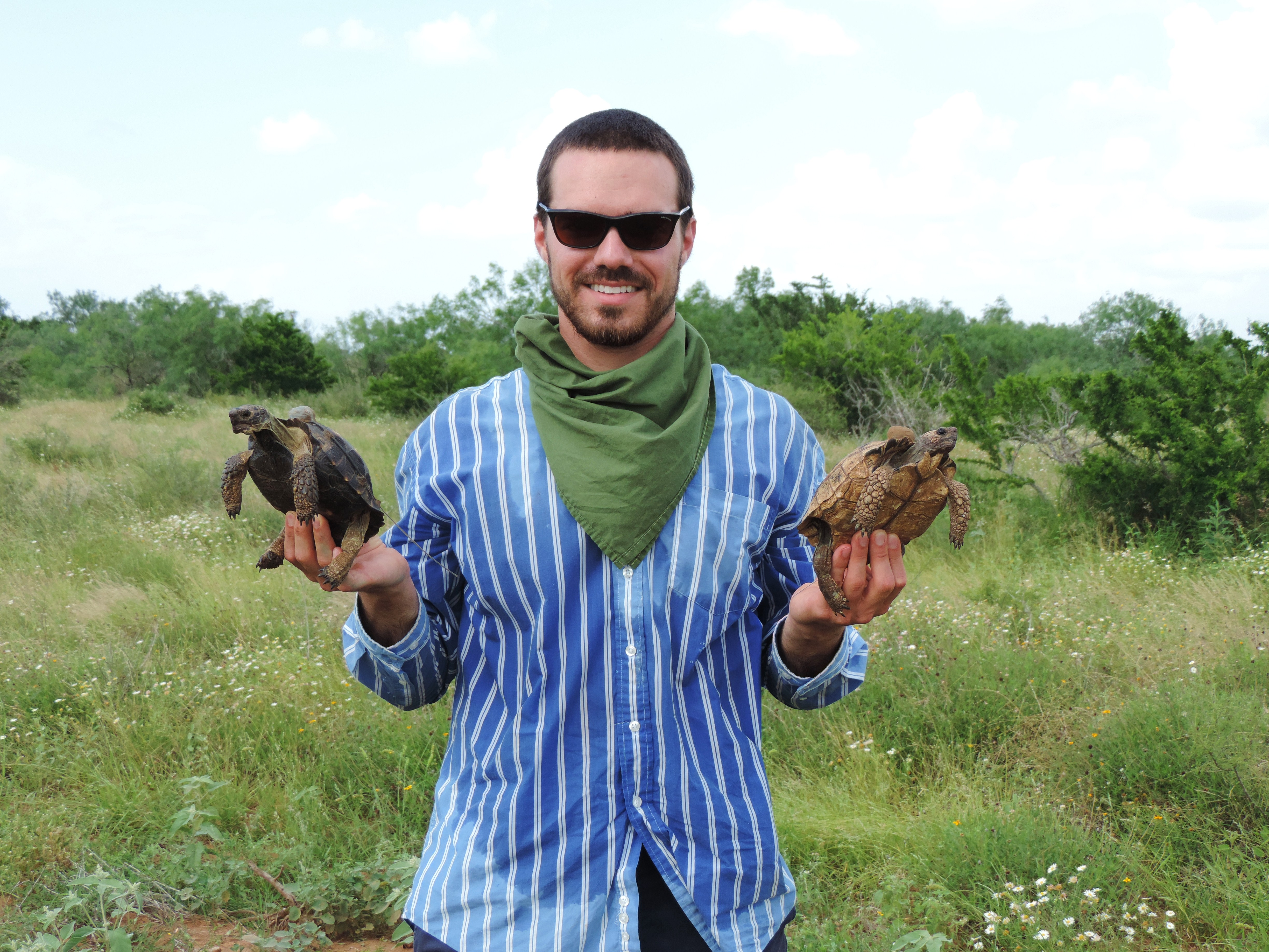 estimation of northern bobwhite densities in south texas Refining the morning covey-call survey to estimate northern bobwhite  abundance  tool to increase abundance of northern bobwhite in south texas   hunting success on albany, georgia plantations: the albany quail project's  modern.